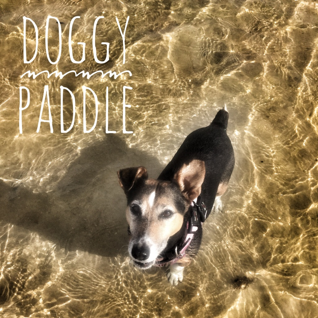 Doggy paddle - dog swimming in Tarifa