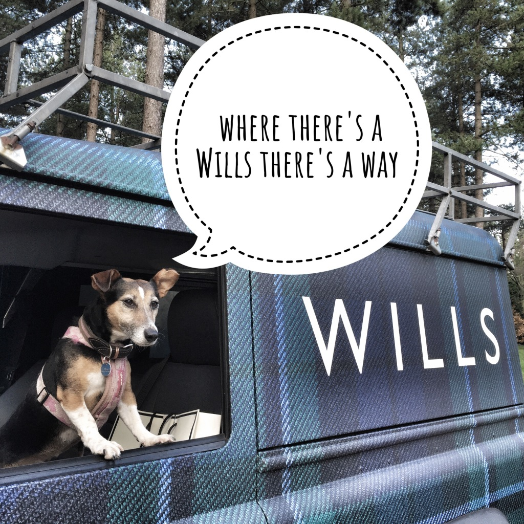 Dog in Jack Wills landrover